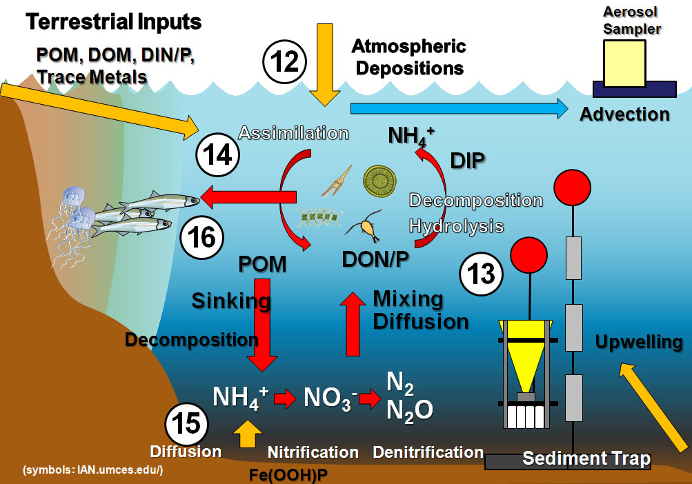 File Name   diagram3 jpg Resolution   1003 x 702 pixel Image Type    Ocean Ecosystem Diagram
